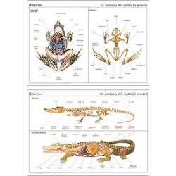 Mural biologia VV-2. Amfibis i rèptils