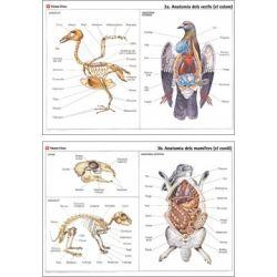 Mural biología VV-3. Aves y mamíferos