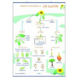 Mural biologia. Parts funcions nutrició ... de les plantes