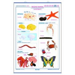 Mural biologia 70x100 cm. Regne animal invertebrats i regne animal vertebrats
