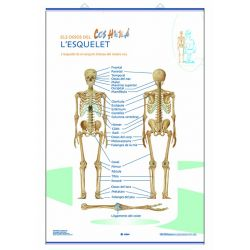Mural anatomia primària. L'esquelet i les parts del cos