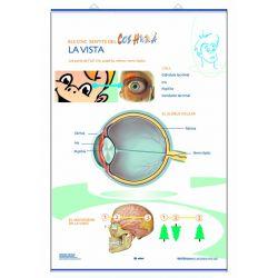 Mural anatomía primaria. Los sentidos de la vista y el oído