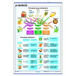 Mural anatomia secundària. Nutrició i el cos humà