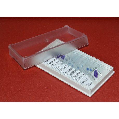 Preparaciones microscópicas MIC. Biología general I (25p)