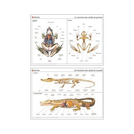 Mural biología VV-2. Anfibios y reptiles