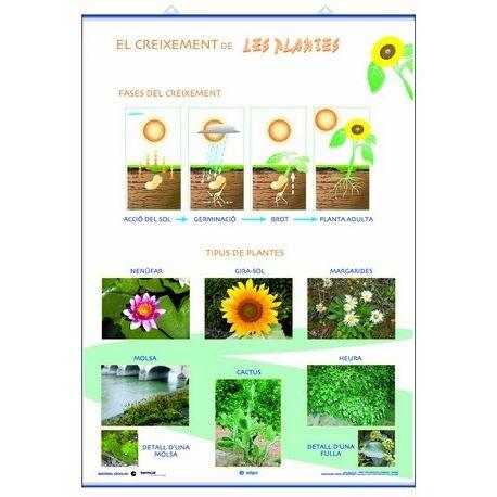 Mural biología 70x100 cm. Crecimiento y clasificación de las plantas