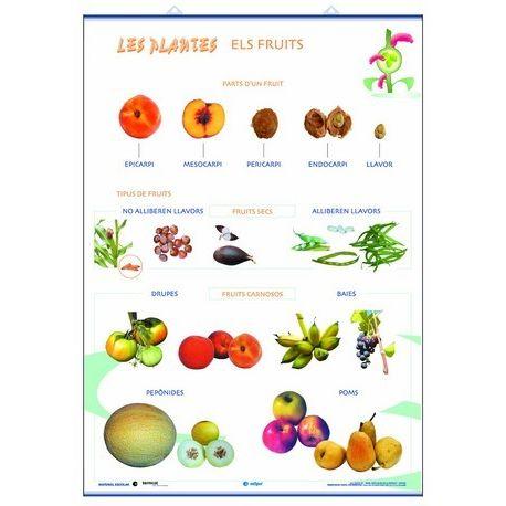 Mural biología 70x100 cm. Los frutos, las plantas y sus utilidades