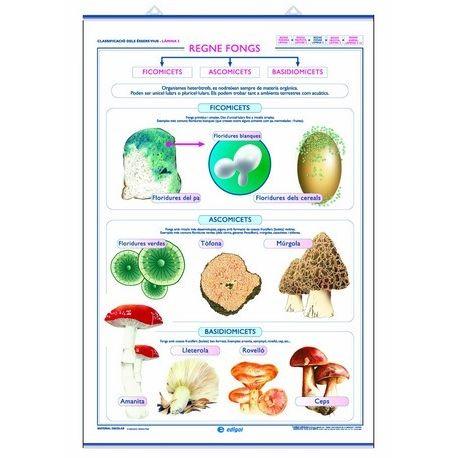 Mural biología. Reino vegetal y reino de los hongos