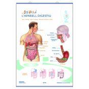 Mural anatomia primària. Els aparells digestiu i excretor