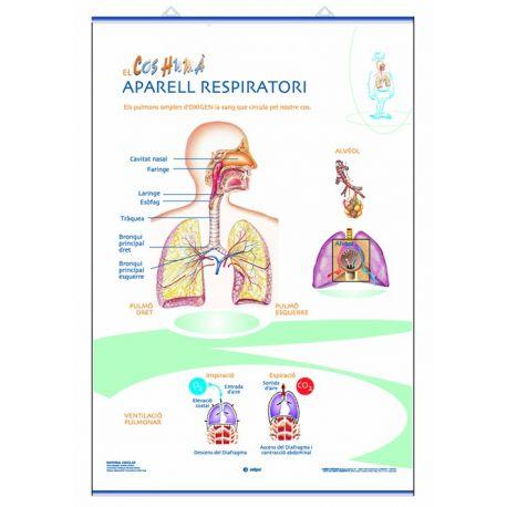 Mural anatomia primària 70x100 cm. Els aparells circulatori i respiratori