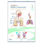 Mural anatomia primària. Els aparells circulatori i respiratori