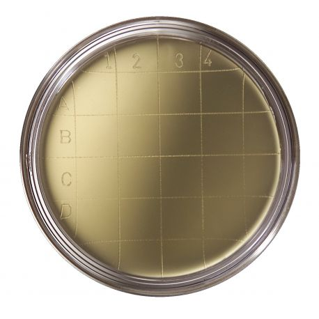 Agar cetrimida pseudomonas contacto L-15332. Caja 20 placas