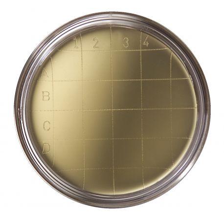 Agar cetrimida pseudomònades (+NEU) contacte L-15386. Capsa 20 plaques