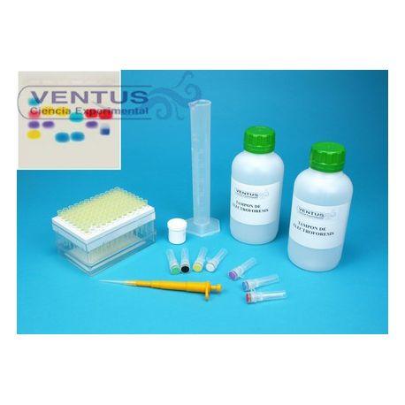 Kit electroforesi en gel d'agarosa I V-44541