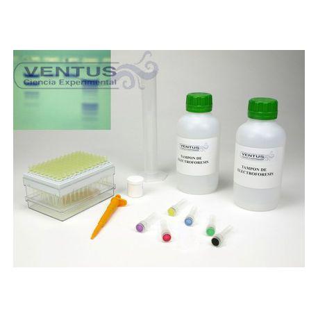 Kit electroforesi en gel d'agarosa II V-44543