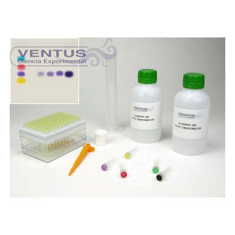 Kit simulació PCR V-44545