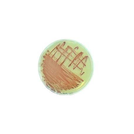 Suplement cromogènic MRSA L-81078. Capsa 10 vials